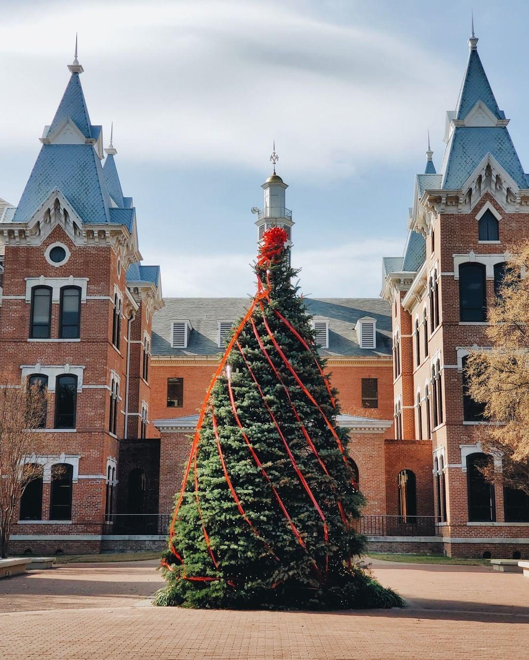 Christmas at baylor beautiful christmas trees beautiful
