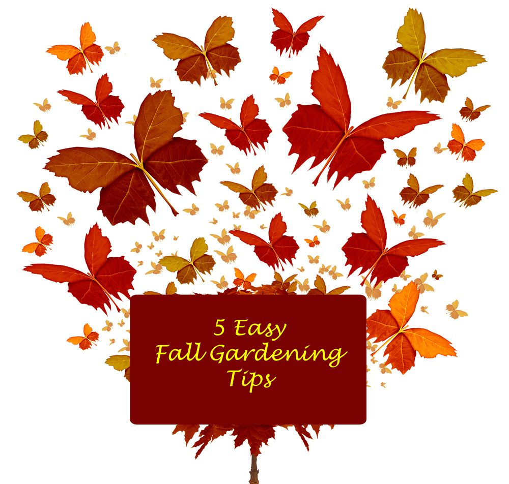 5 Easy Fall Gardening Tips for your Gardens Spring and Fall