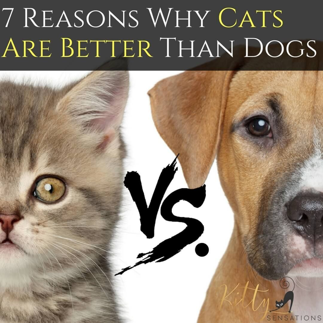 Cats vs. Dogs 7 Reasons Why Cats Are Better Than Dogs