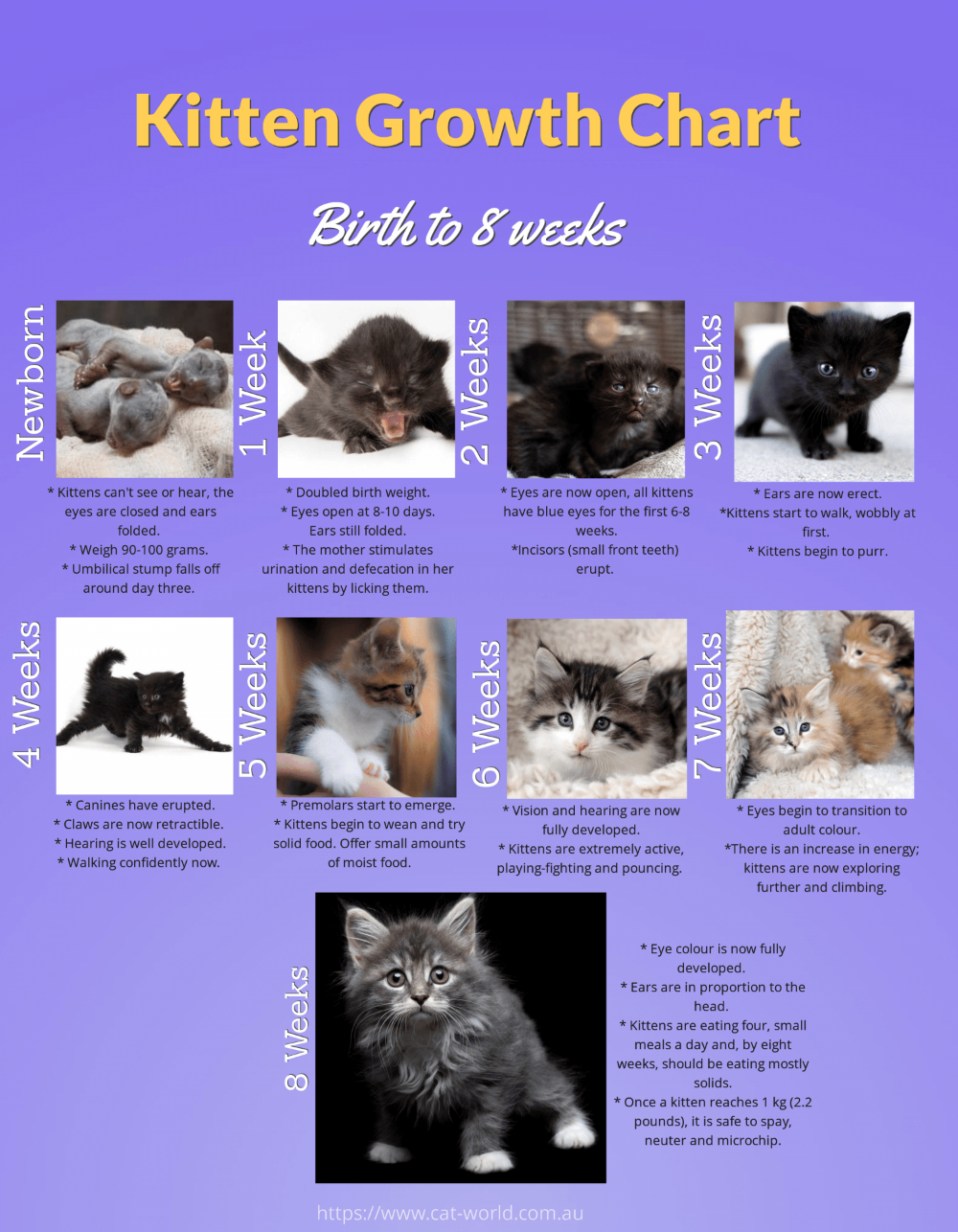 Pin By Cat Lover On Cat Development Chart Kitten Growth Chart Newborn Kittens Dog Rescue Idea