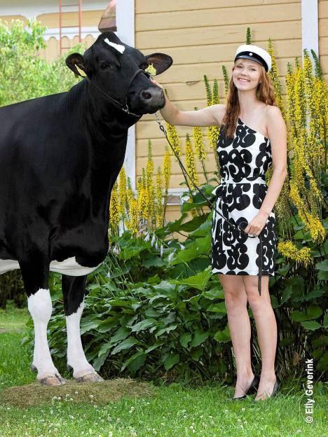 Maitotilan kasvatit: Tamara-lehmä ja Laura Vanhatalo, yhdessä niin arjessa kuin juhlassakin. --- (Ihana!!!)