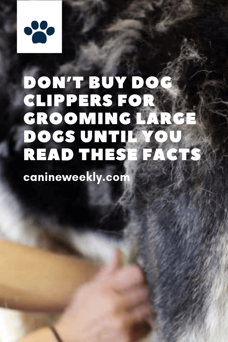 5 Best Dog Grooming Clippers For 2020 Updated Reviews Dog Clippers Dog Grooming Clippers Dog Care Tips