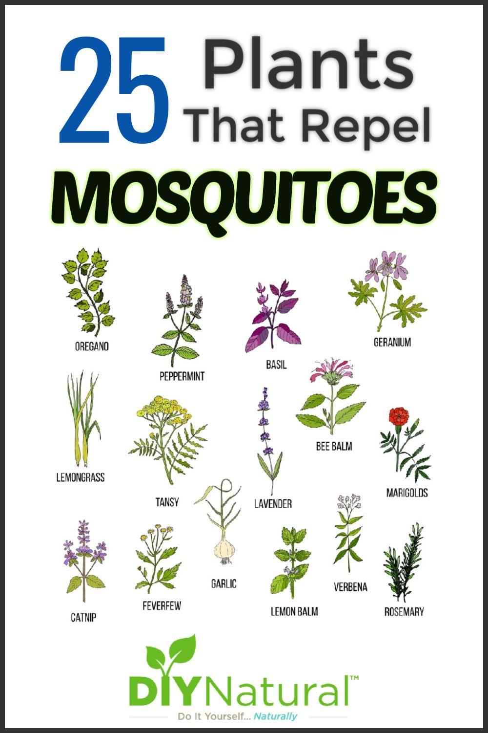 Mosquito Repellent Plants: 25 Plants That Repel Mosquitoes Naturally!