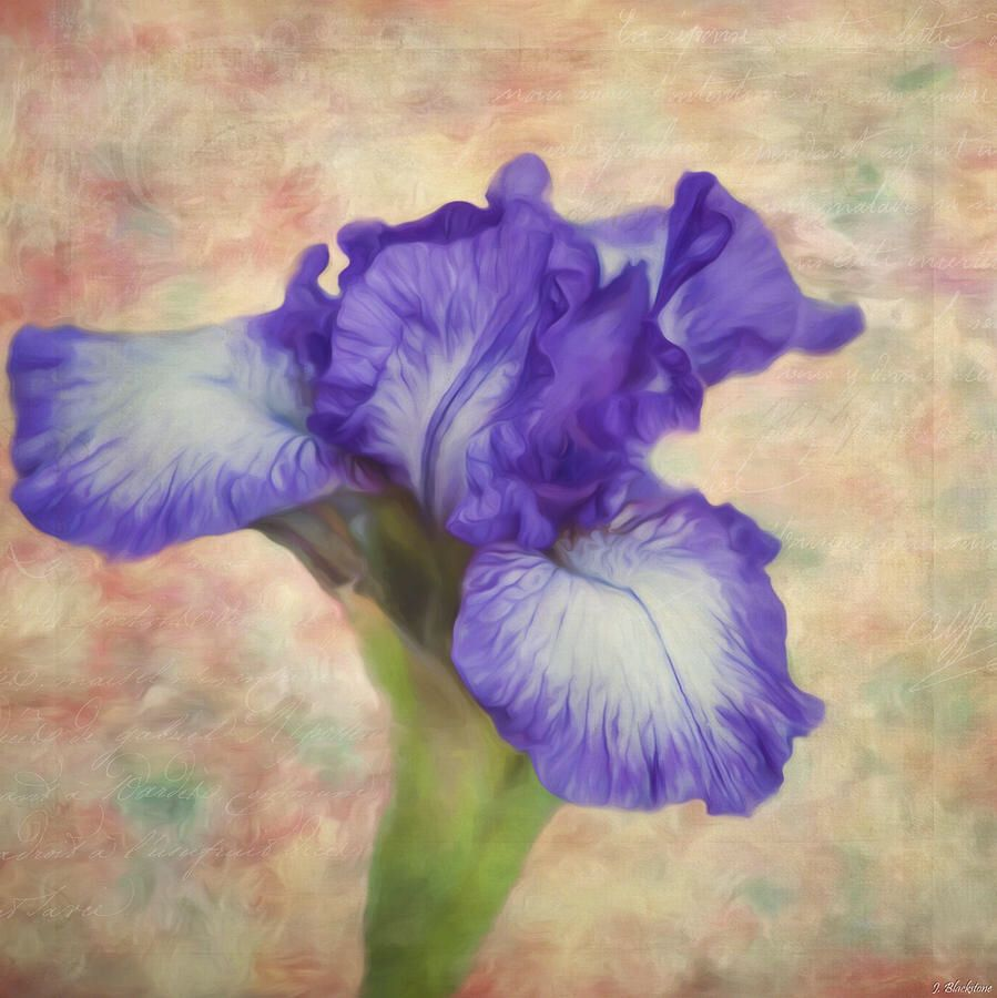 Flower art the meaning of an iris painting by jordan blackstone flower art the meaning of an iris painting by jordan blackstone izmirmasajfo