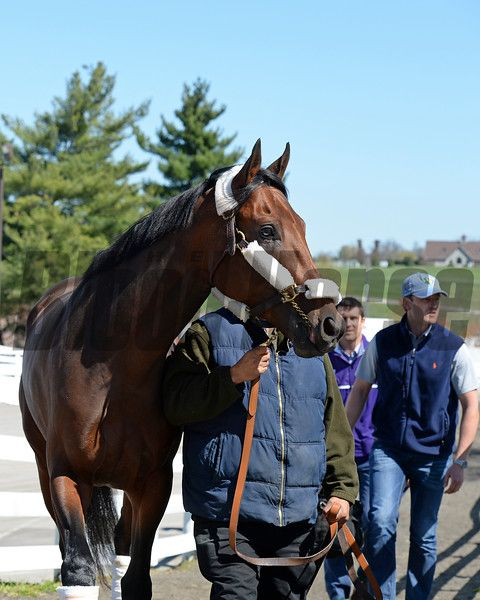 Nyquist Thoroughbred Horse Keeneland Sport Of Kings