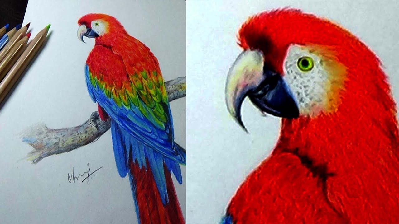 Colourful Parrot Pencil Drawing For Beginners How To Draw Parrot Simple And Easy Drawing Hi Every O Easy Drawings Drawing For Beginners Colorful Parrots