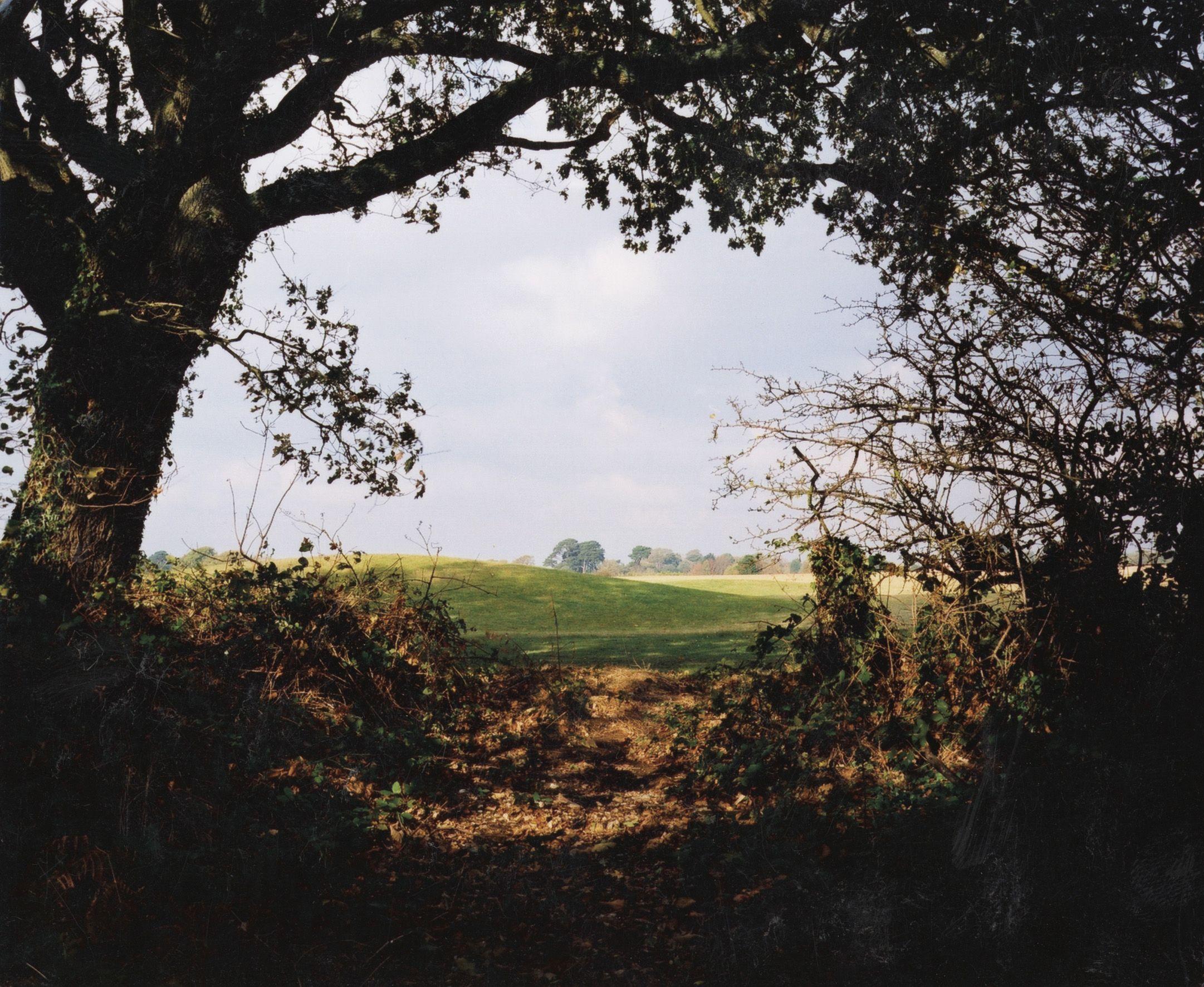 Seto New Forest 2003 Richard Billingham Landscape Photos Photography Landscape
