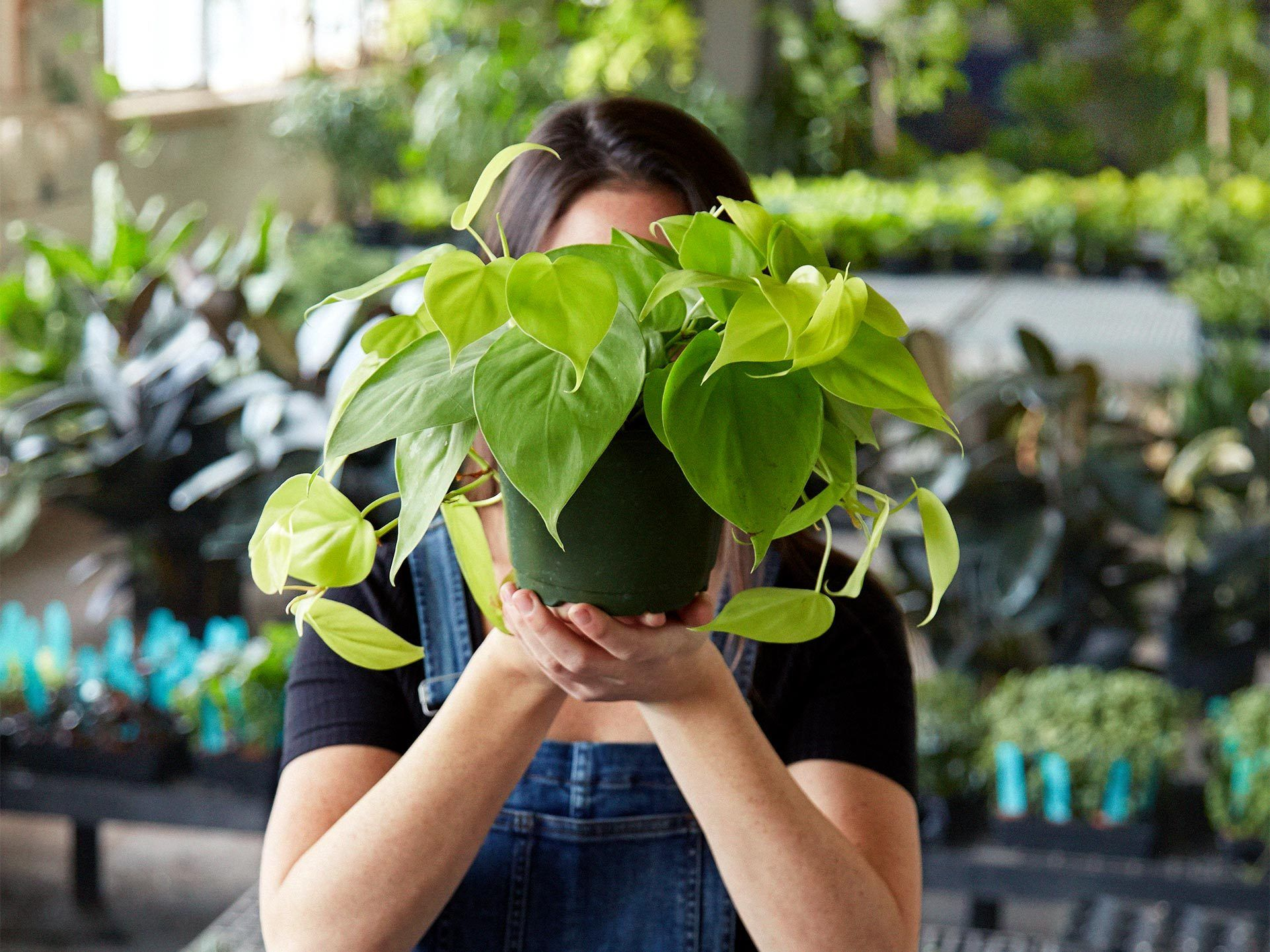 Your Garden Center Online Easy Care Plants Delivered To Your Door
