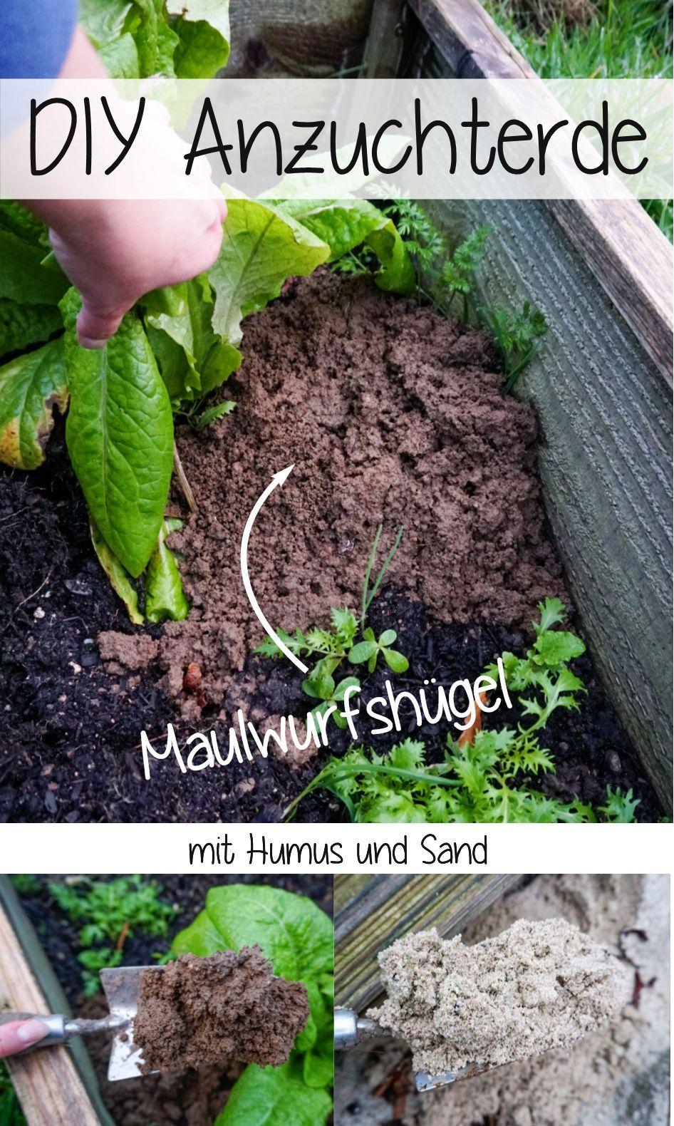 Anzuchterde Maulwurf Balkon Gemuse Garten In Baden Baden Upcycling Fur Den Garten Garten Pflanzen