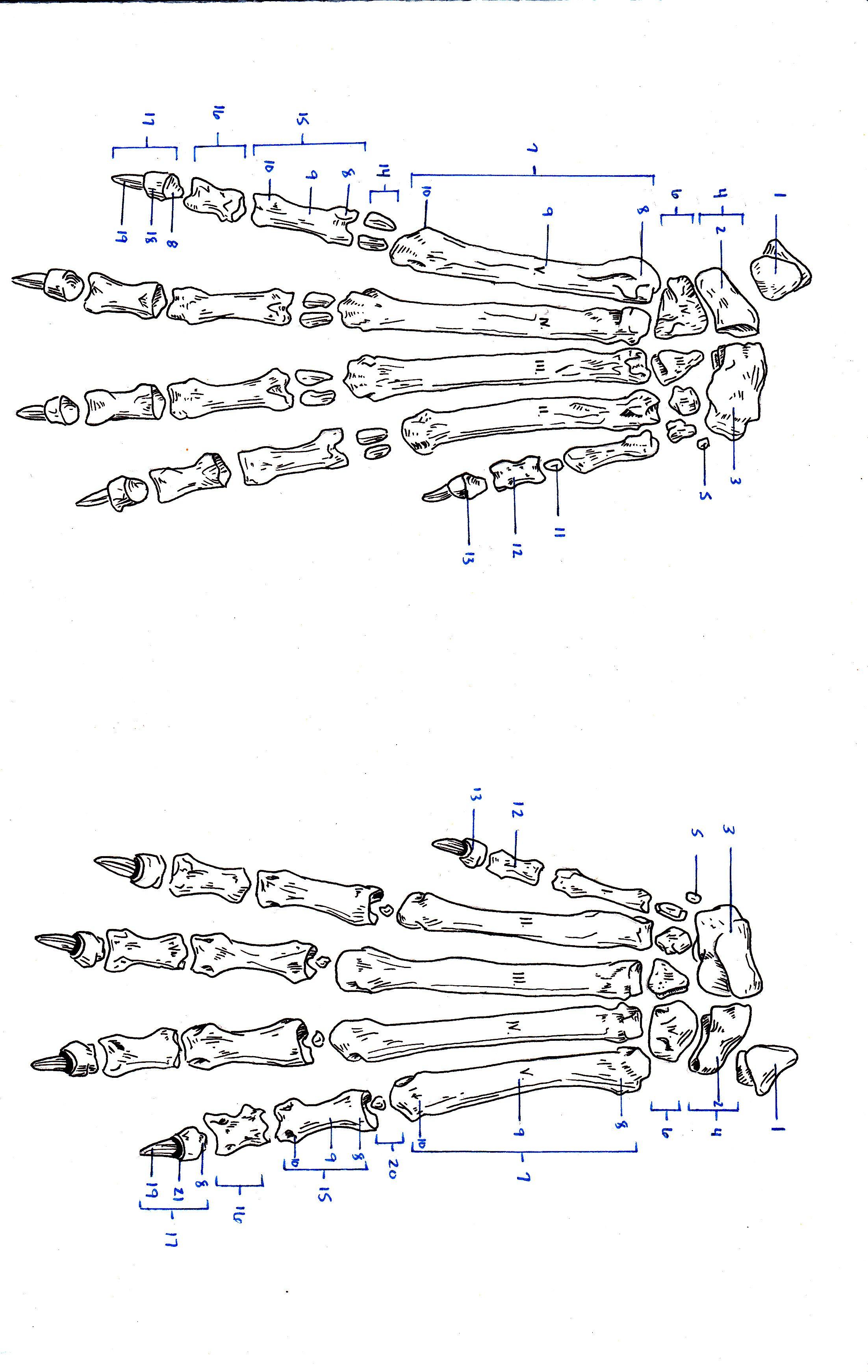 Veterinary Sketch