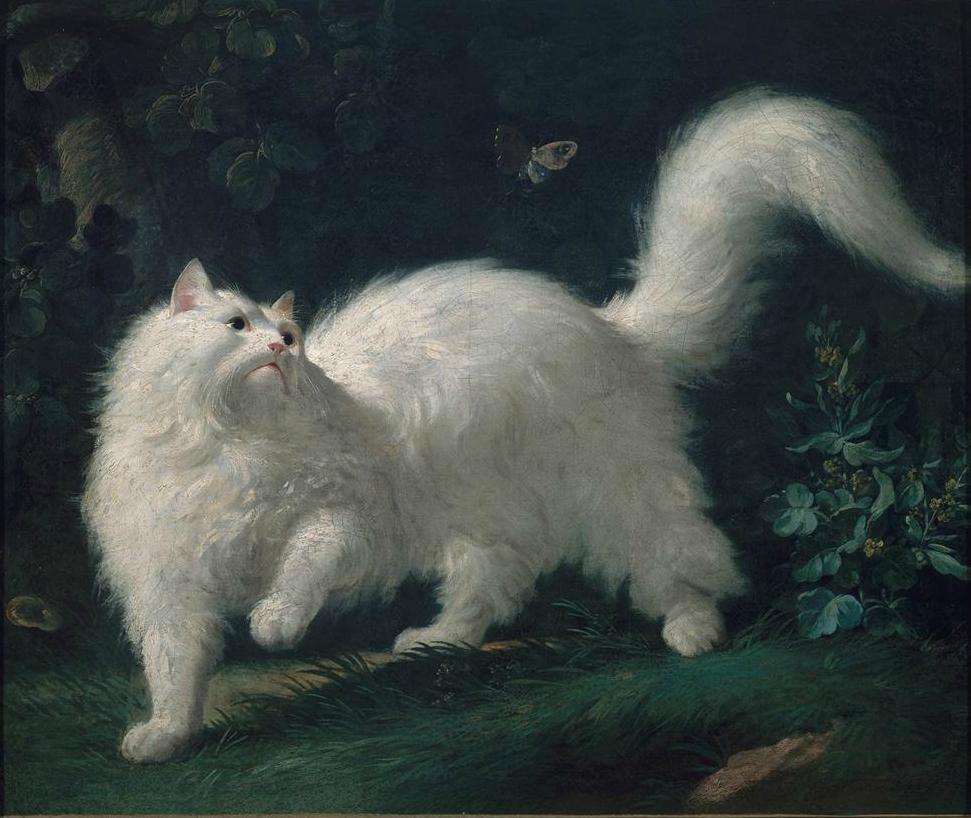 18 Turkish Angora Cats ideas   angora cats, turkish angora cat, cats