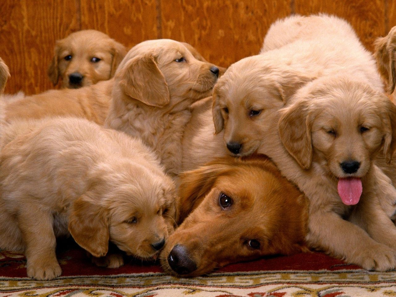 Momma Looks A Little Tired Cute Animals Dogs Cute Dogs