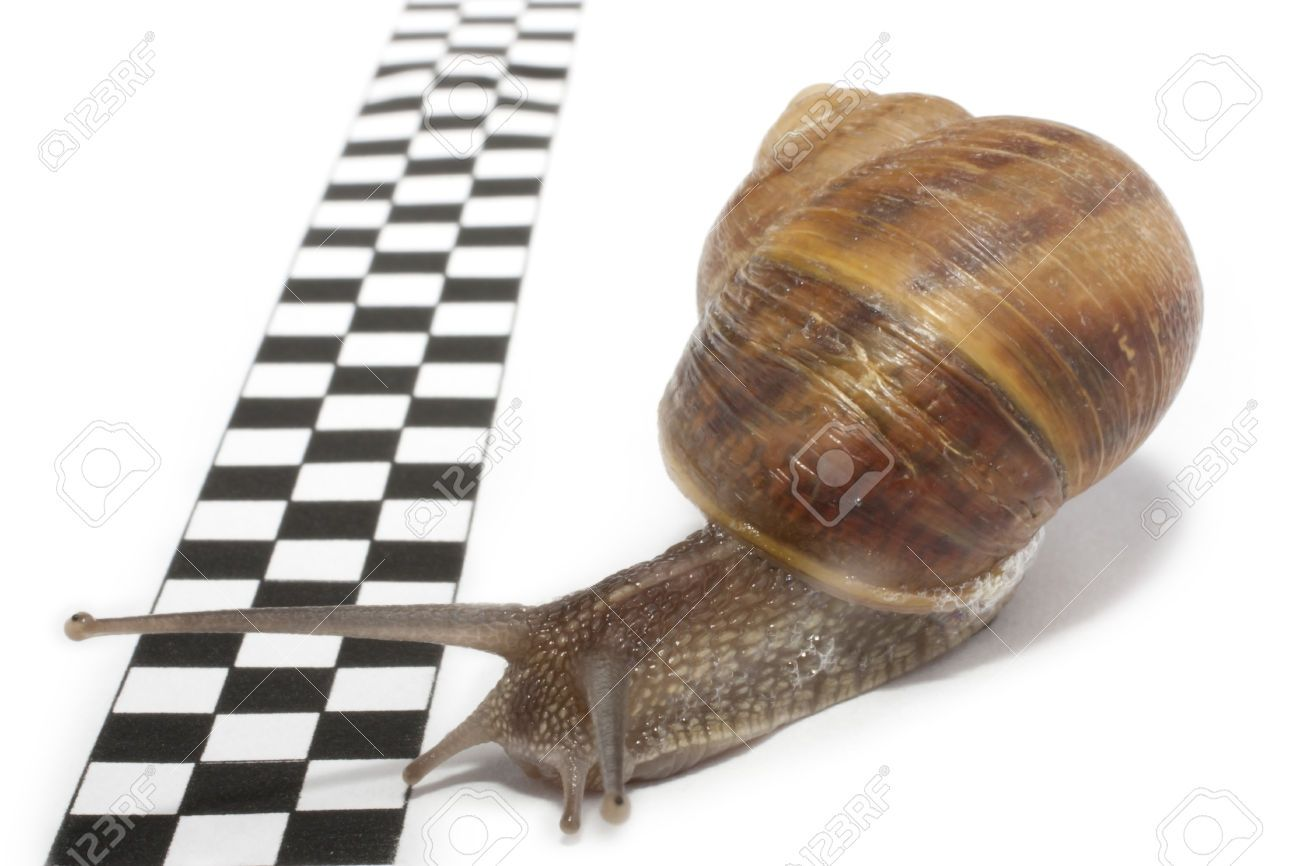 slow snail - Google Search