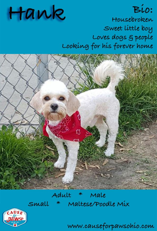 adopted hank is the sweetest little dog looking for a fun loving rh pinterest com