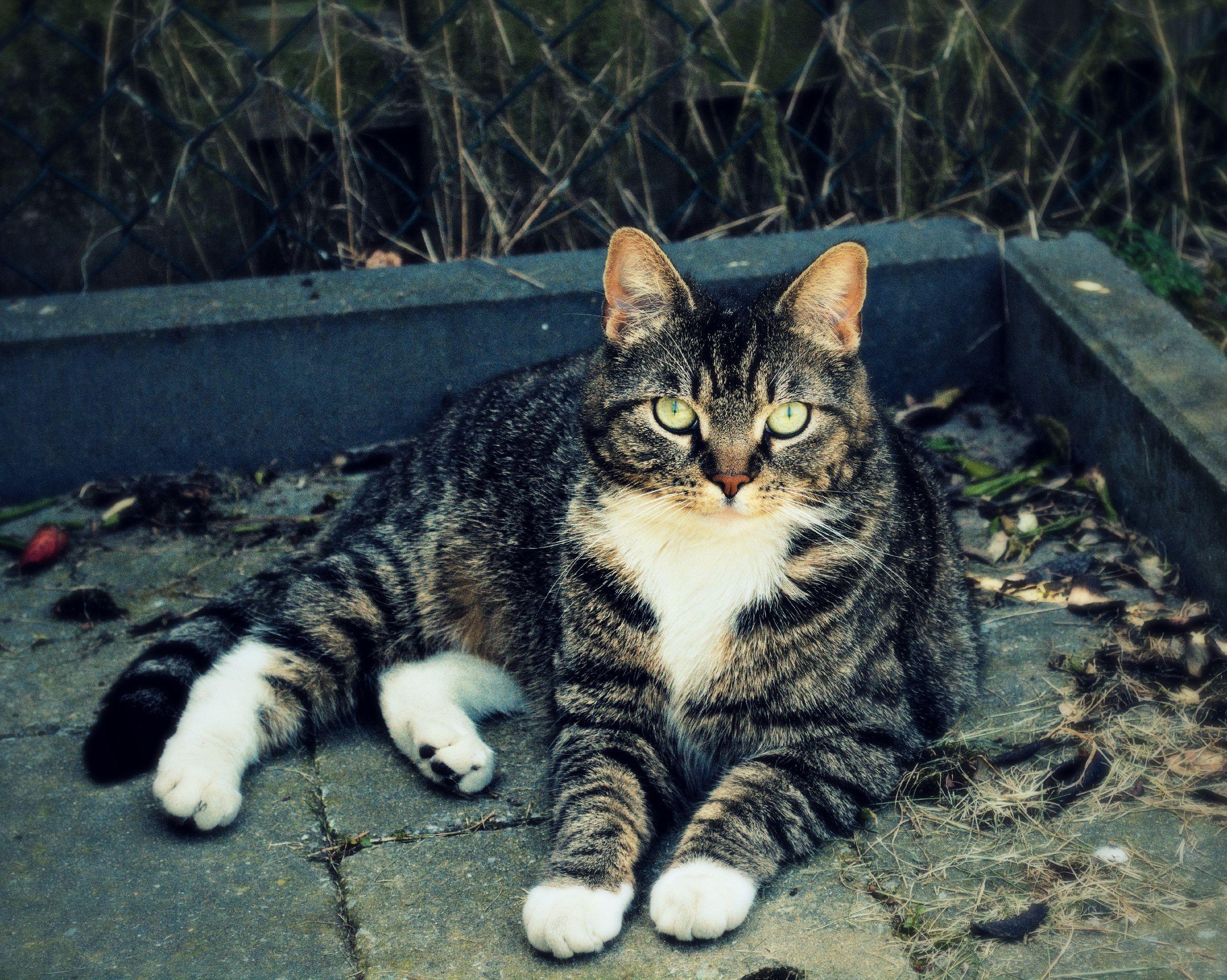 Whiskers Kat | Pawshake