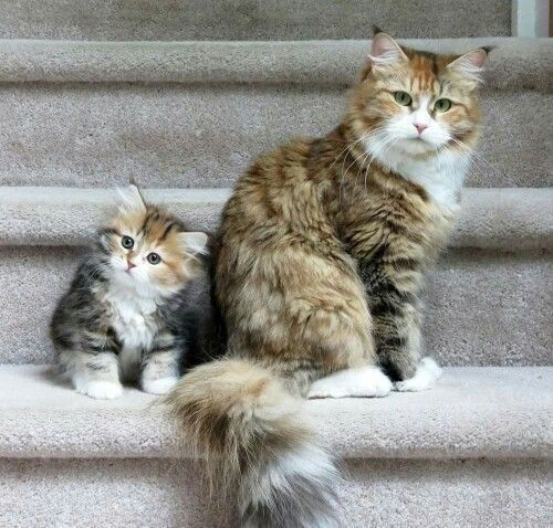 Double Action Copycats In Purrfect Synchronization 32 Pics Kitten Pictures Cats And Kittens Kittens