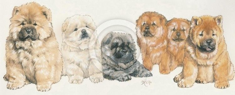Chow Chow By Barbara Keith Akc Breeds Chow Chow Breeds