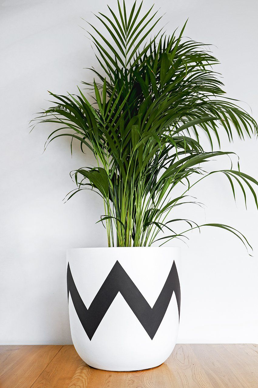Pow Pots Ziggy Hand Painted Modern Plant Pot In 2020 Plant Pot Design Painted Plant Pots Plant Pot Diy