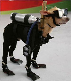 What a silly dog. He has goggles on!