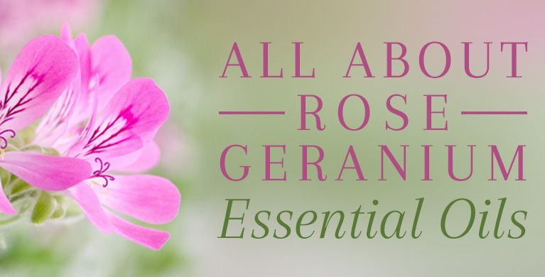 All About Rose Geranium Oil Rose Geranium Essential Oil Rose Geranium Oil Rose Oil Benefits