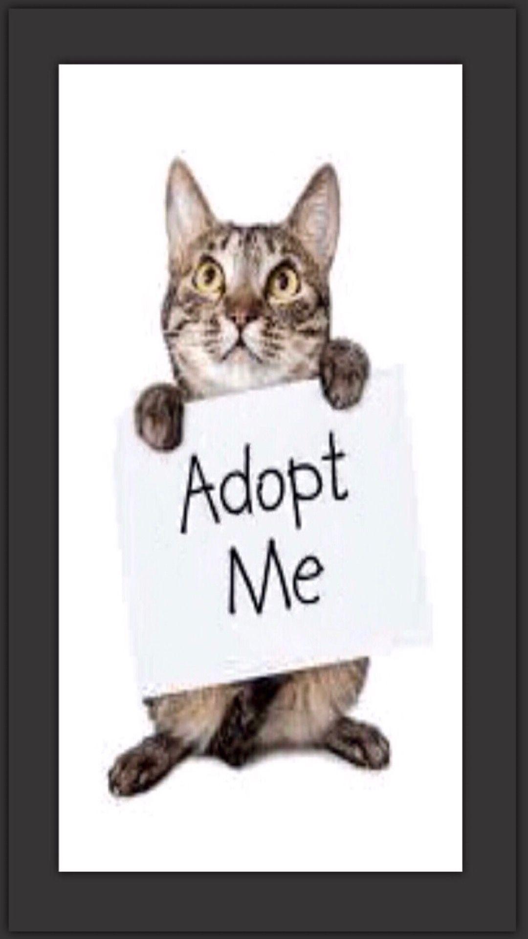 Adopt Me Cat Adoption Cats Adoption Signs