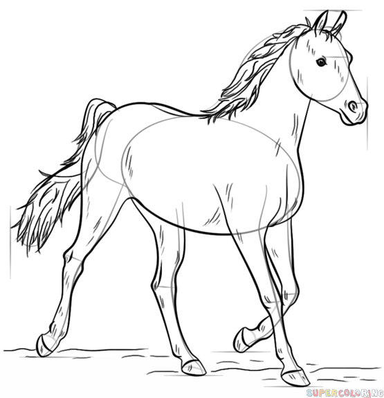 How to draw an arabian horse step by step. Drawing ...