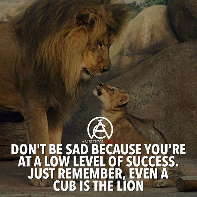 Lion Quotes And Sayings Everyone has to...