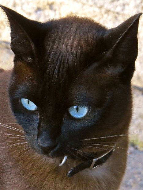 Ojos Azules   Look What the Cat Dragged In   Pinterest ...