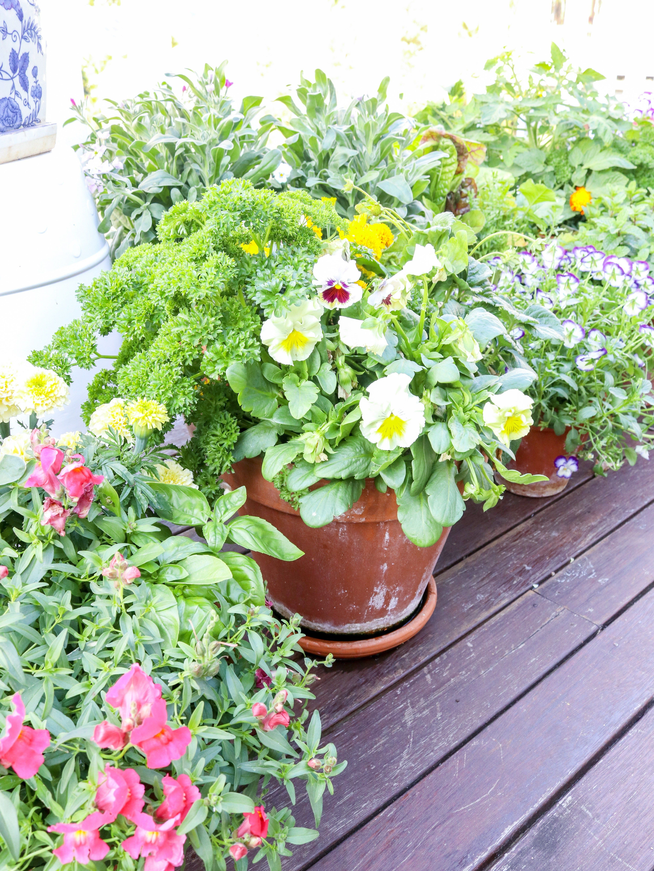 how to grow a kitchen garden in pots kitchen garden veggie garden container gardening vegetables on kitchen garden id=72369