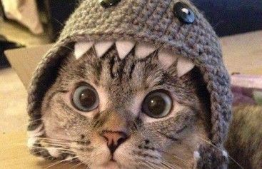 Cat Crochet Shark Hat