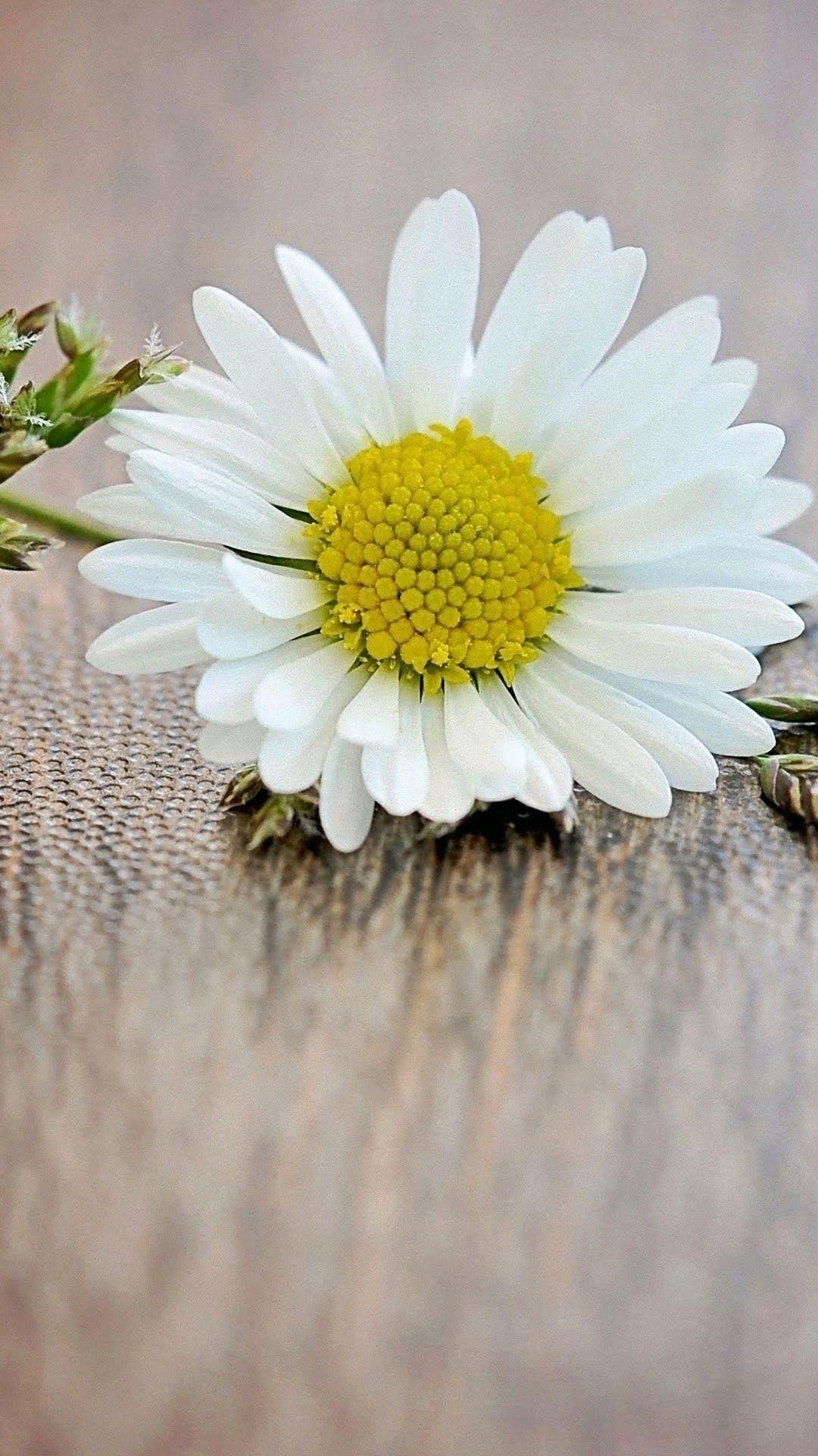 Pin By Mongkol Sangpandee On A G Pinterest Flowers