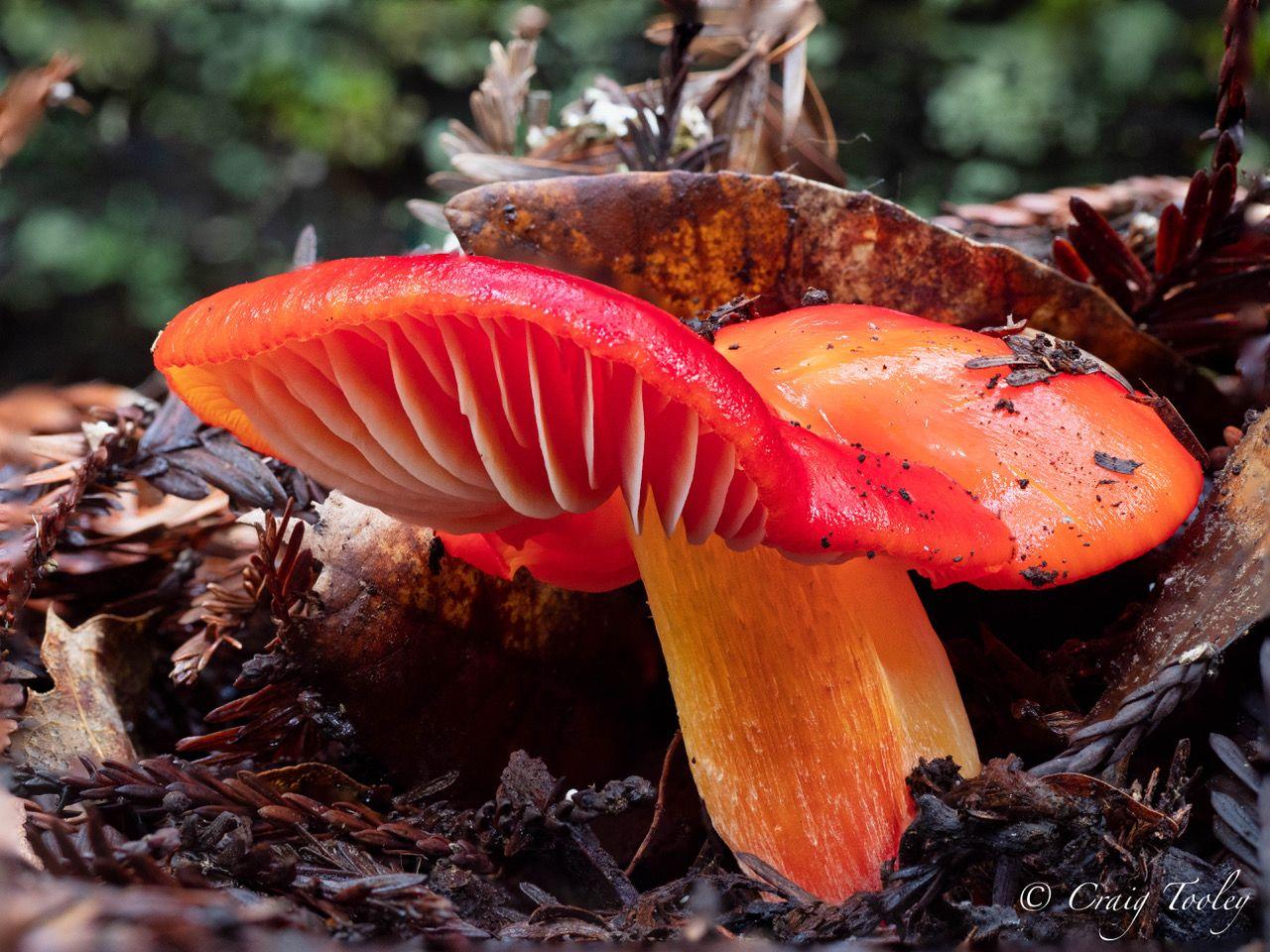 All The Rain Brings Mushrooms