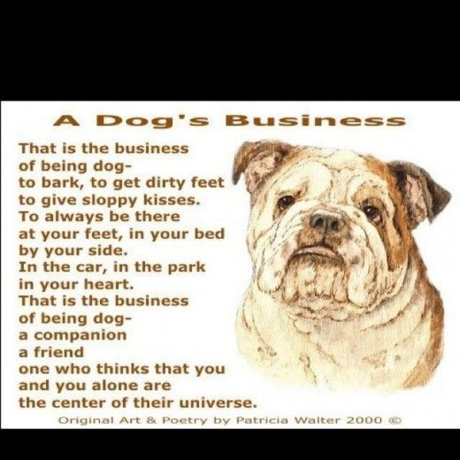 Bulldog Quote Dog Business Bulldog Quotes Dogs