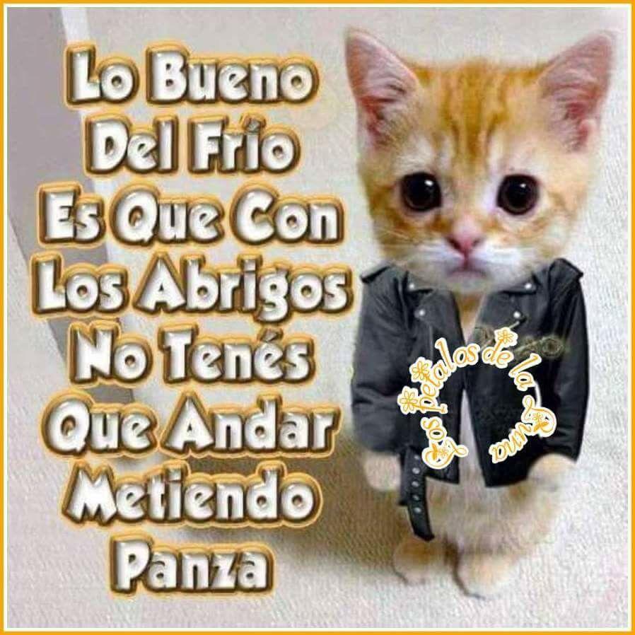 Lo Bueno Del Frio Animals Humor Memes
