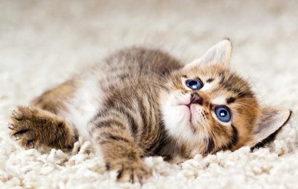 Wo finde ich so eine Babykatze? Baby katzen, Katzen und