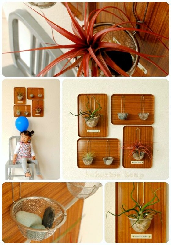 Trend: Air Plants For all of you that weren't born with a green thumb, the air plant is for you. I love the variety of creative air plant display DIY's out there. Do you have air plants in your home? Air Plant Display from Suburbia Soup. Framed Air Plant Display from All The Good Girls [...]