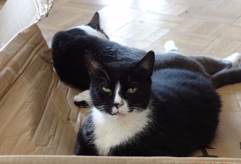 SPONSOR RESCUED OREO an EVICTED RELO FERAL CAT RESCUE FOOD