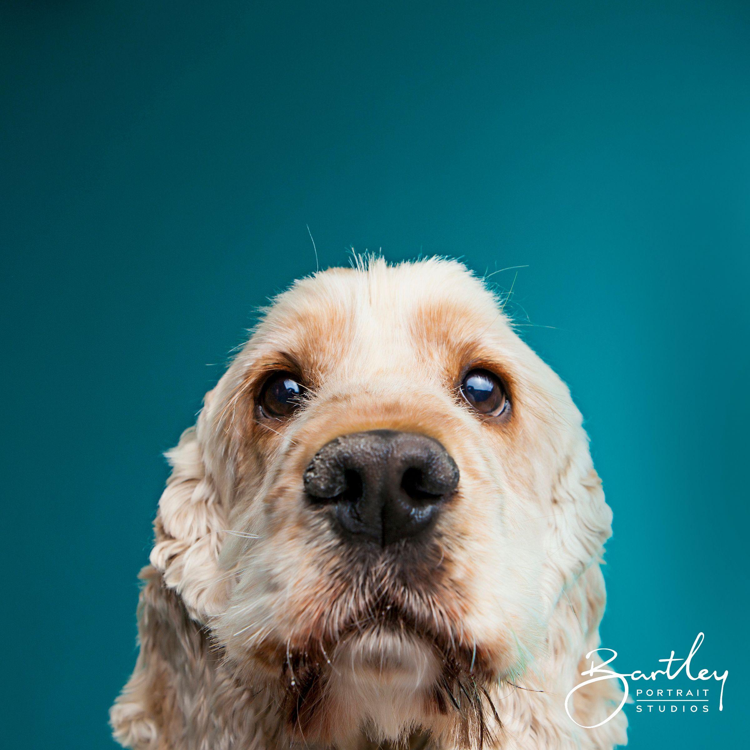 Pet Dog Portrait Photography