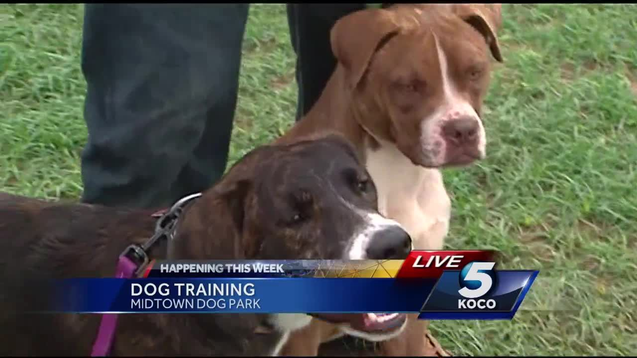 A+trainer+is+on+a+cross+country+mission+to+get+your+stubborn+dog+to+fall+in+line.+The+event+is+this+weekend+at+the+Midtown+Mutts+Dog+Park.+KOCO's+Steve+Bottari+interviewed+the+trainer.
