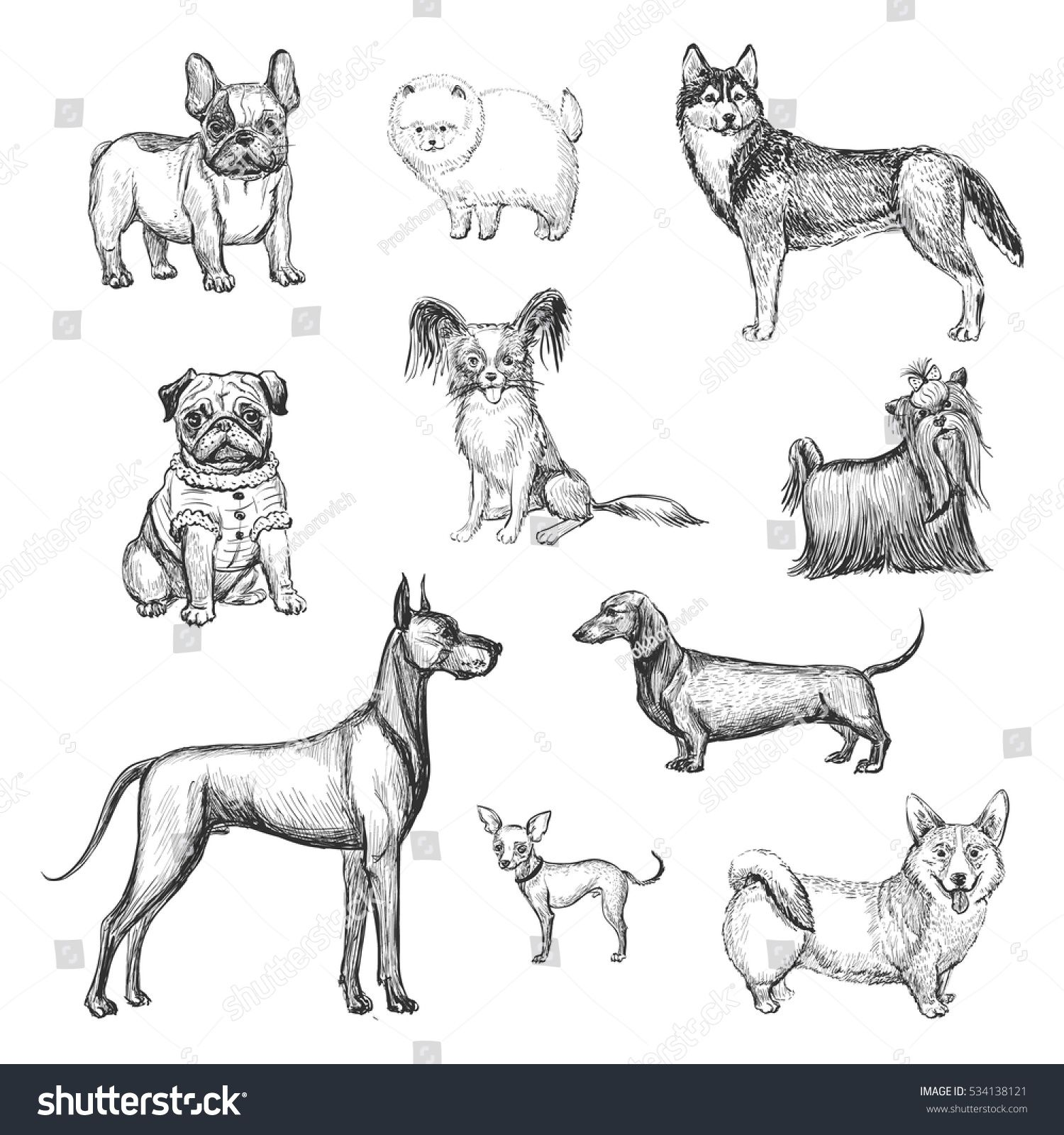 A Collection Of Sketches Breed Dogs Isolated Hand Drawings