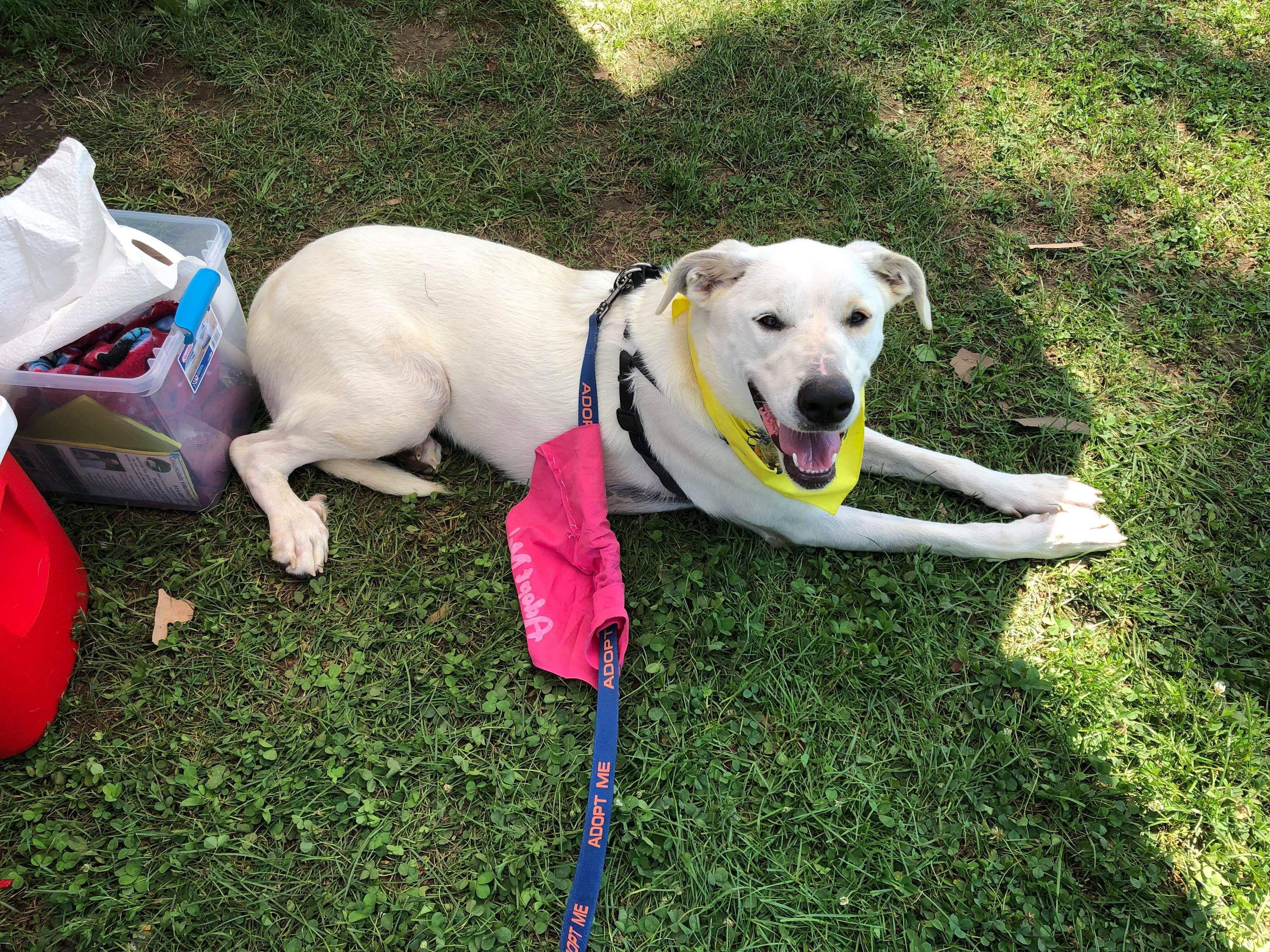 Adopt amara on petfinder help homeless pets pets adoption