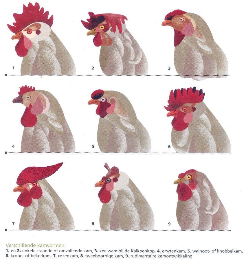 Kippen in de Tuin - MergenMetz
