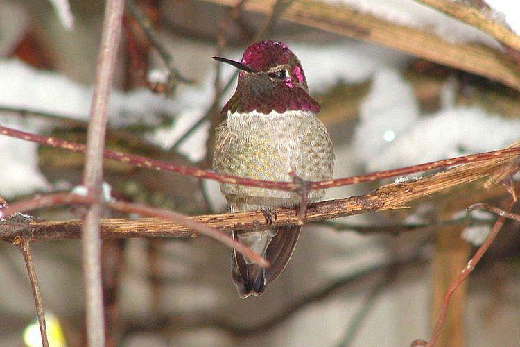 Learn How To Find Hummingbirds In The Wintertime Humming Bird Feeders Bird Species Hummingbird