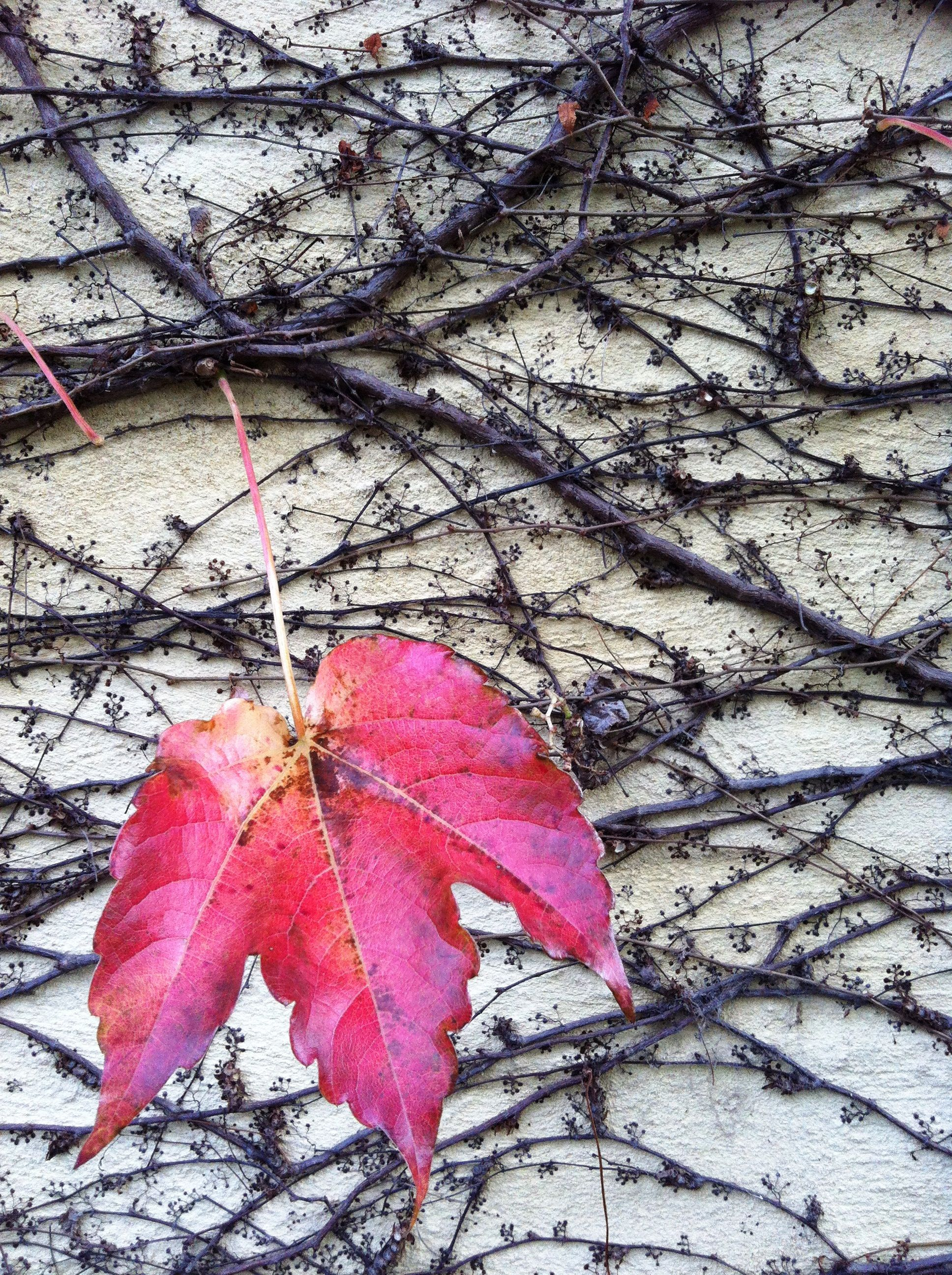 One Red Thread inspiration Boston Ivy