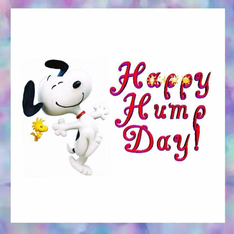 Happy Hump Day Wednesday Hump Day Happy Wednesday Quotes Wednesday Quotes