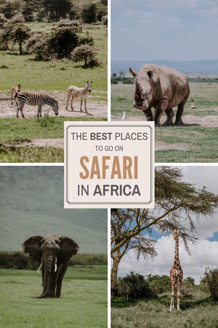 Safari in Kruger National Park, South Africa | Serena's Lenses -   18 travel destinations Africa adventure ideas