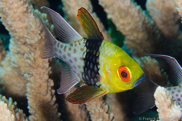 Pin On Wild Beautiful Under Water