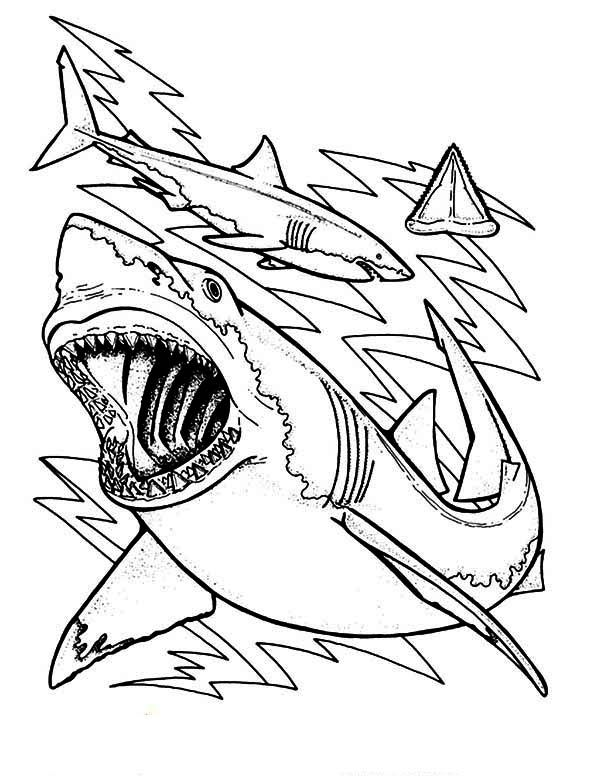 Sharks, : The Anatomy and Teeth of the Great White Shark Coloring ...