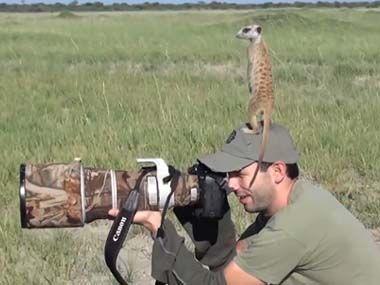 野生のミーアキャットをカメラで撮っていたら仲良くなる ミーアキャットの子供たちが体に登ってきたw ぬこわん跡地 旧ねこ わん ミーアキャット 動物 動物 癒し