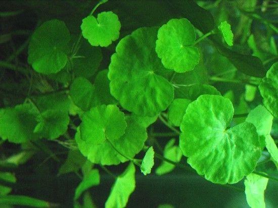Hardiness Very Easy Light Needs Medium Plant Structure